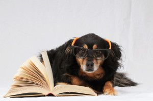 7 Simple Ways to Make Your Dog Smarter