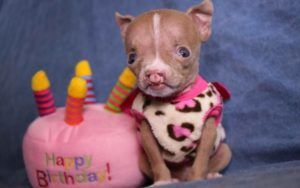 Special Needs Puppy Passes Miraculous Milestones, Thanks To Her Cat-Rescuing Foster Mom
