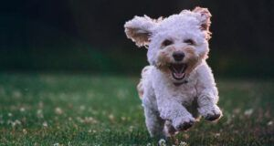 Company Will Pay You Thousands To Play With Puppies All Day