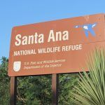 Birding under Clouds of Uncertainty: Santa Ana NWR