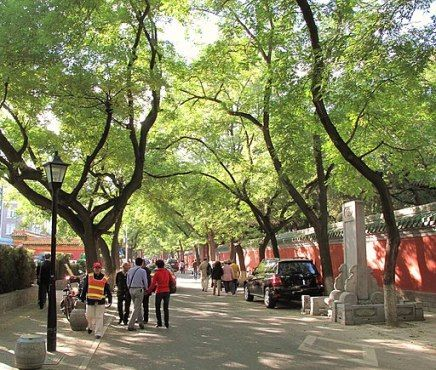 Leafy Cities