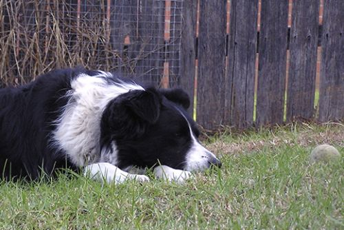 When Your Dog Stops Eating: Julie's Story
