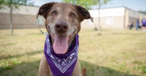 A Guide To Creating The Ultimate Bucket List For Your Aging Senior Dog