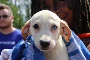 """Michigan Is Now A """"No-Kill"""" Shelter State. Here's What That Means"""