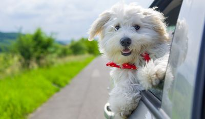 Dog Car Travel Tips: Things To Take Care Of BEFORE You Leave