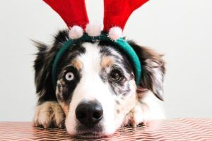 Here's How To Share Your Favorite Seasonal Flavors With Your Dog!