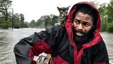 'Survivor' The Kitten Flees Hurricane Florence Floodwater Clinging To Man's Neck