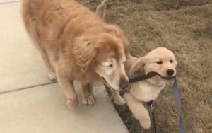 Blind Senior Dog's Life Changes Thanks To A Special Helper