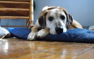 How Much Do Dogs Understand About Death?