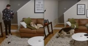 Watch: Clever Dog Lends Dad A Paw With Laundry