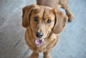 10 Signs Your Dog Is Truly Happy