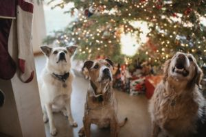 Spoil Your Pup This Christmas With Their Very Own Christmas Tree Ornament!