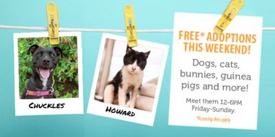 Adopt a pet for free this weekend at Seattle Animal Shelter