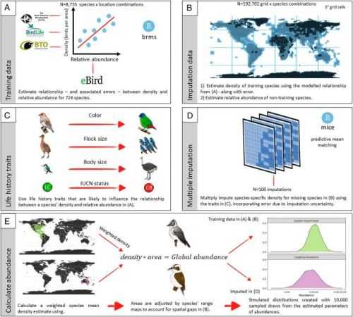 How Many Birds in the World?