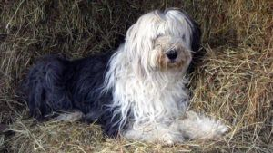 Choosing The Best Joint Supplement for a Old English Sheepdog - 6 Things You Must Know