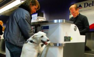 Delta Airlines Initiates New Rules For Psychiatric Service & Support Animals