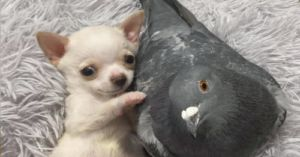 Puppy And Pigeon Friendship Raises Money For Animal Rescue