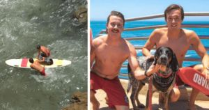 San Diego Lifeguards Rescue Dog From Rough Waters