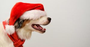 The Top 30 Gifts Dogs Are Begging Santa for This Year