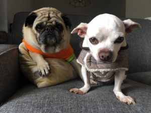 "Senior Dog ""Shuts Down"" In Shelter Until A New Pal Changes Everything"