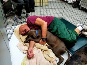 Dog Snugglers Needed at Humane Society of Tampa Bay