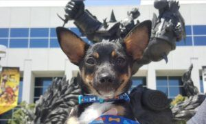 Blizzard Entertainment - The Most Pet Friendly Company In The World