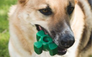Got A Dog That Loves To Chew? Then You Gotta Try This!