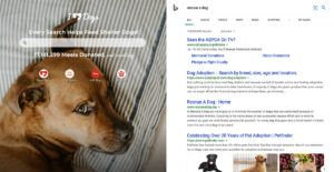 Software Company Invents Genius Way to Save Shelter Dogs Every Time You Do An Internet Search