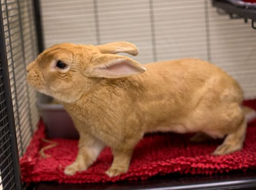 """""""KAI"""" great bunny for a first time owner"""