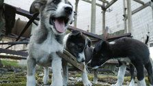 The Radioactive Puppies Of Chernobyl Are Finally Getting The Help They Need