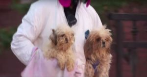 Shocking Discovery: More than 130 Dogs Rescued From Unthinkable Neglect