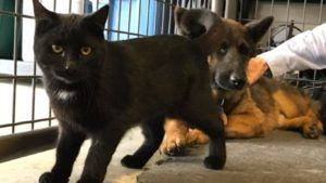 Sweet, Fearful Dog And Her Feline Best Friend Need A Home Together