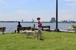 Best Dog Walks in Baltimore