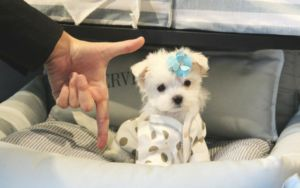 City Passes Anti-Puppy Mill Law, But One Notorious Pet Store Isn't Happy