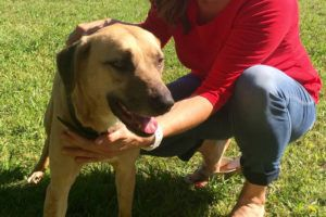 Rebuilding And Beautifying Texas Shelter Helps Adoption Rates!