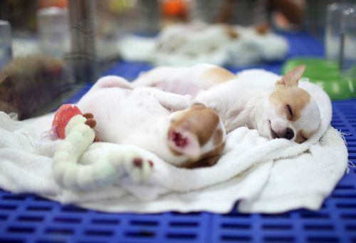 California Becomes First State to Ban Retail Sale of Companion Animals