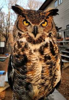 Whoo Is That Owl?