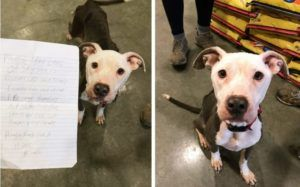 Owner Facing Homelessness Leaves Dog At Shelter With Heartbreaking Note