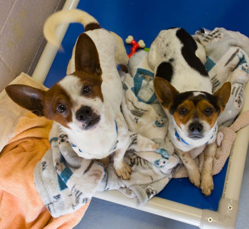 """""""TIDE"""" and """"POD"""" BONDED PAIR! young chi mix"""