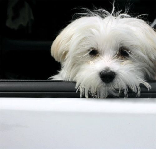 Alternatives to Leaving Your Pet in a Car | Winslow Animal Hospital Dog & Cat