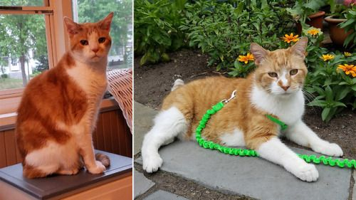 In May 2017 we adapted two 13-year-old cats
