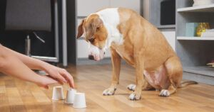 Calling All Genius Dogs: Researchers Want To Hear From You!