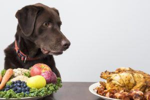 10 Best Cancer Preventing Foods For Your Dog