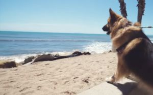 Dog Who Spent His Entire Life In Chains Visits The Ocean For The First Time