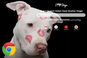Use Google Chrome? Now You Can Feed Shelter Dogs Every Time You Do an Internet Search