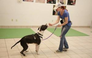 """3 Ways To Take Advantage Of """"National Train Your Dog"""" Month This January"""