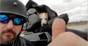 Biker Rescues Dog From Physical Abuse on Highway