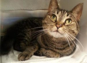 Foster cat orientation at Seattle Animal Shelter Sept. 10