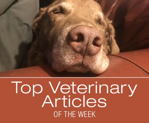 Top Veterinary Articles of the Week: Resistant Lyme Disease? Diabetes and Dental Disease, and more