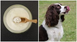 Is Coconut Oil Good For Your Dog's Digestion?
